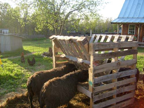 Pallets Hay Feeder Animal Pallet Houses & Pallet Supplies Lounges & Garden Sets
