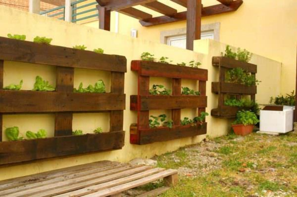 Pallets Used as Vertical Planters On An Outdoor Wall Pallet Planters & Compost Bins