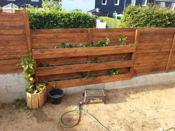 Palisade Wall With Strawberries / Palissade Avec Mur De Fraisiers Pallet Fences