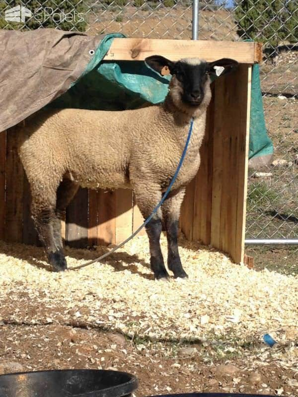 Animal Pallet Shelter Animal Pallet Houses & Pallet Supplies