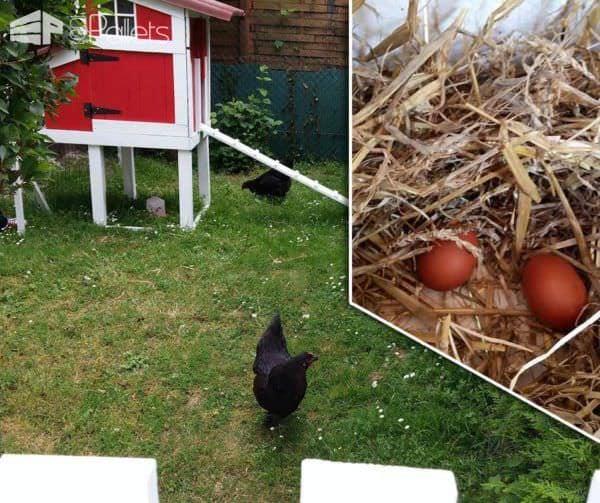Red Pallet Chicken Coop Animal Pallet Houses & Pallet Supplies