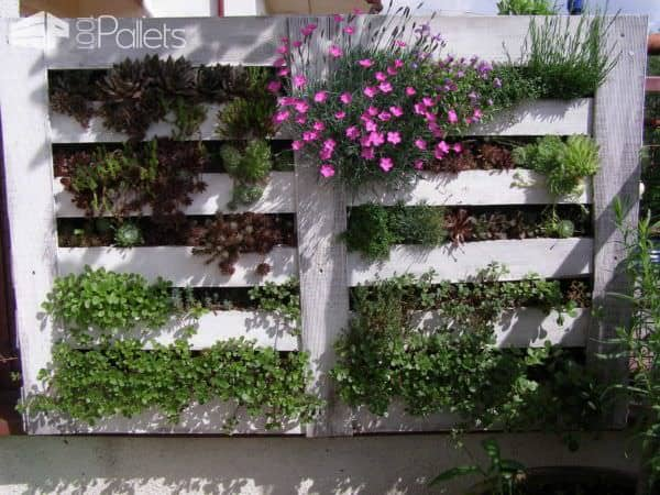 Vertical Succulent Garden With Wooden Pallet Pallet Planters & Compost Bins