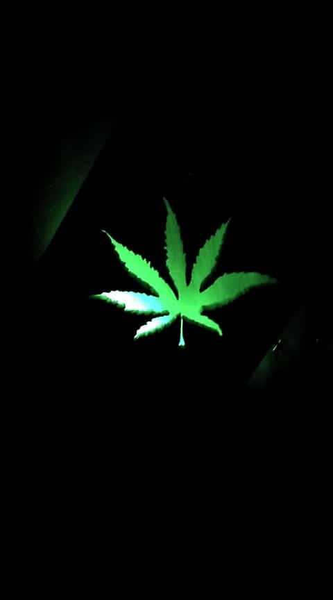 Cannabis Leaf Pallet Wall Décor Pallet Lamps & Lights Pallet Wall Decor & Pallet Painting