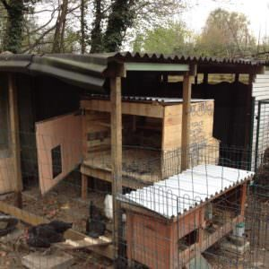 1001pallets.com-chicken-coop-from-pallets9