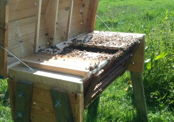 1001pallets.com-how-i-made-my-top-bar-beehive-from-pallets